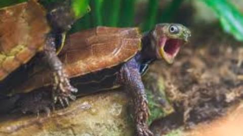 Adventures in Turtle Sex
